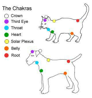 animal chakras